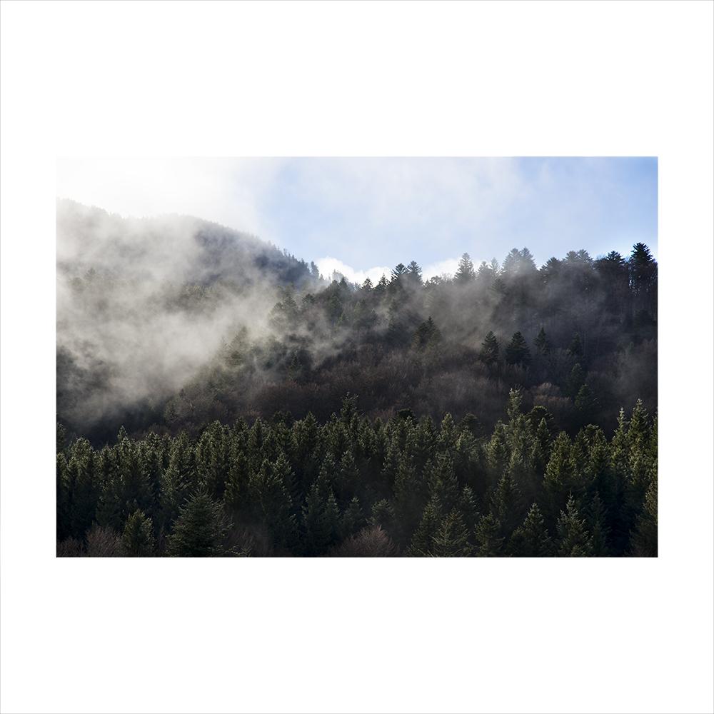 4-Forêt